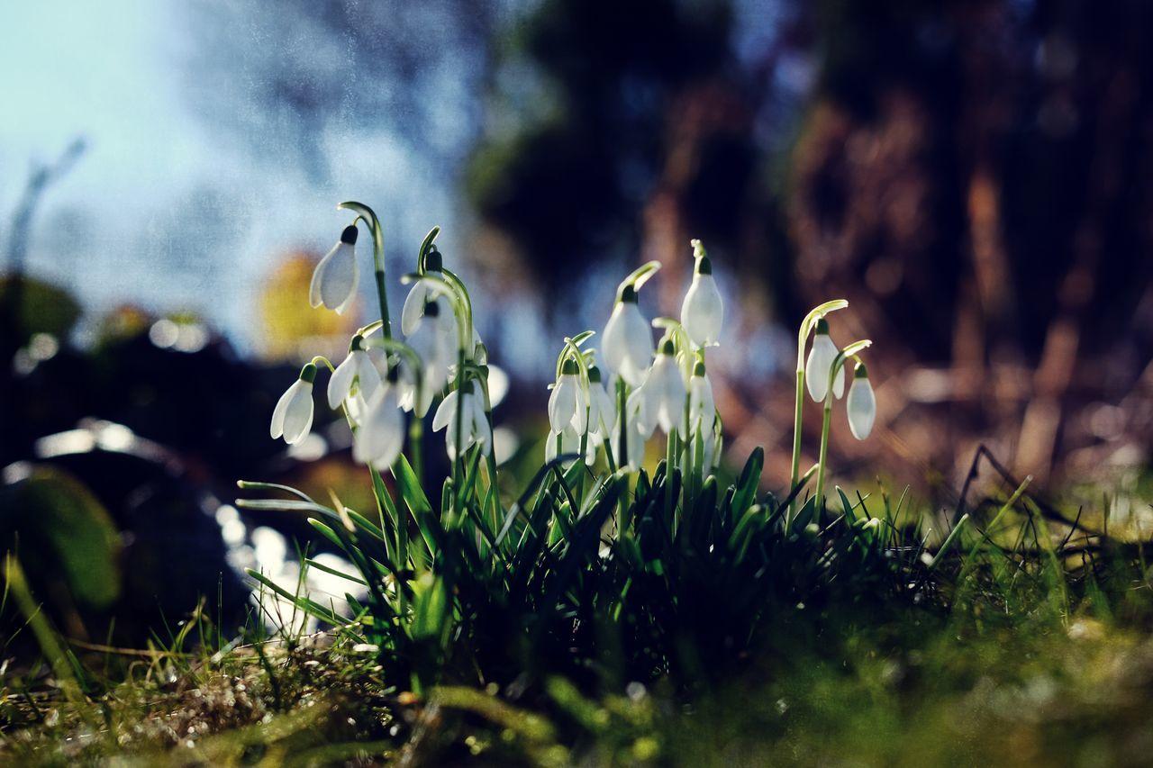 Landscapes With WhiteWall Taking Photos Mirrorlessrevolution EyeEm Nature Lover EyeEm Best Shots - Flowers Spring Flowers Spring Vårblommor Varen FujifilmXPro2 Xpro2 Sverige Fujifilm_xseries EyeEm Flower Sotenäs Västkusten