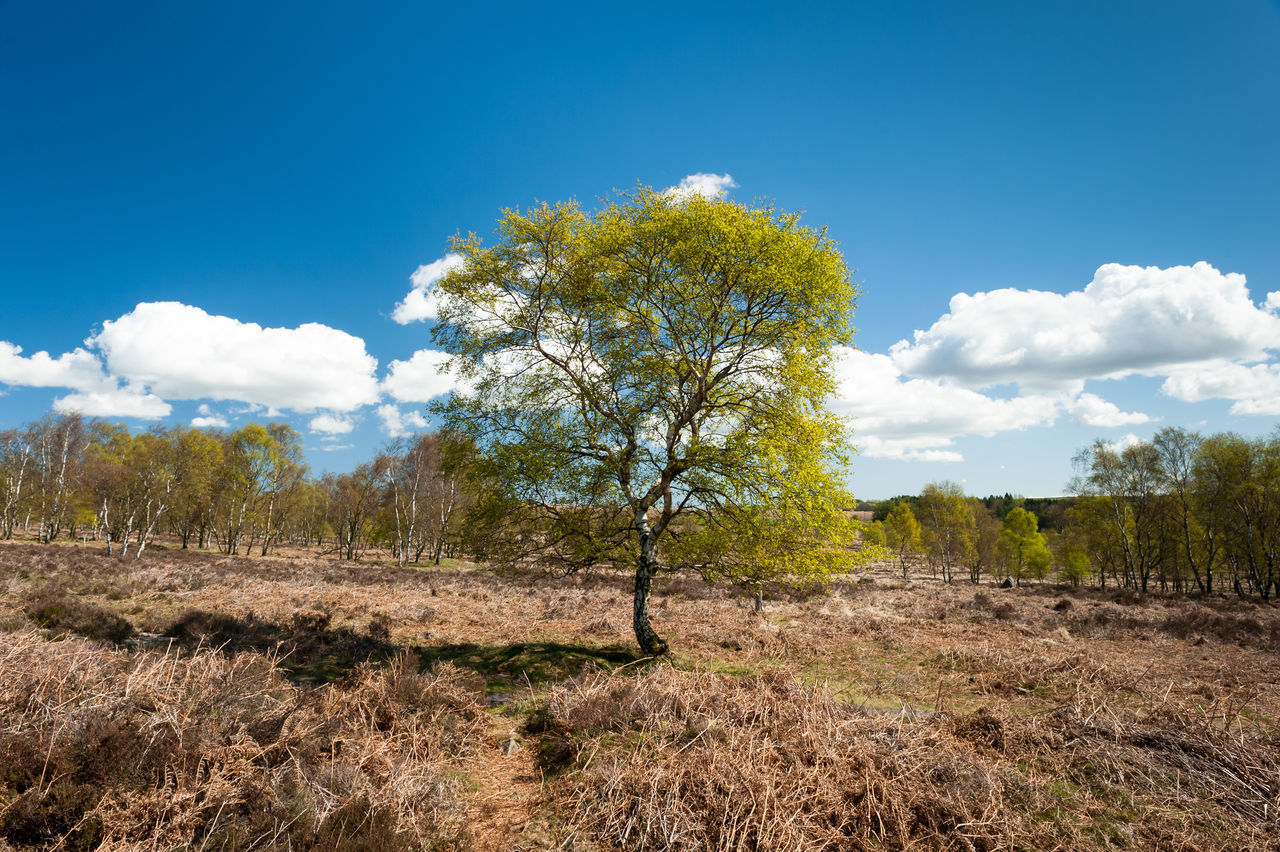 Beauty In Nature Blue Cloud - Sky Countryside Day Derbyshire Growth Landscape No People Outdoors Peak District  Sky Springtime Sun Tranquil Scene Tree