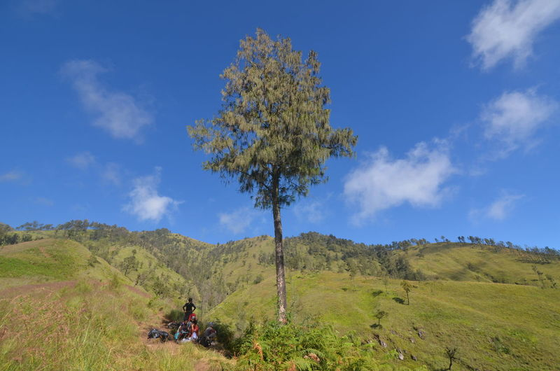 Rinjani Mountain, Lombok, Indonesia Agushariantophotography Beauty In Nature Blue Day Landscape Mountain Nature No People Outdoors Rinjani Mountain Scenics Segara Anak Lake Sky Tranquility Tree