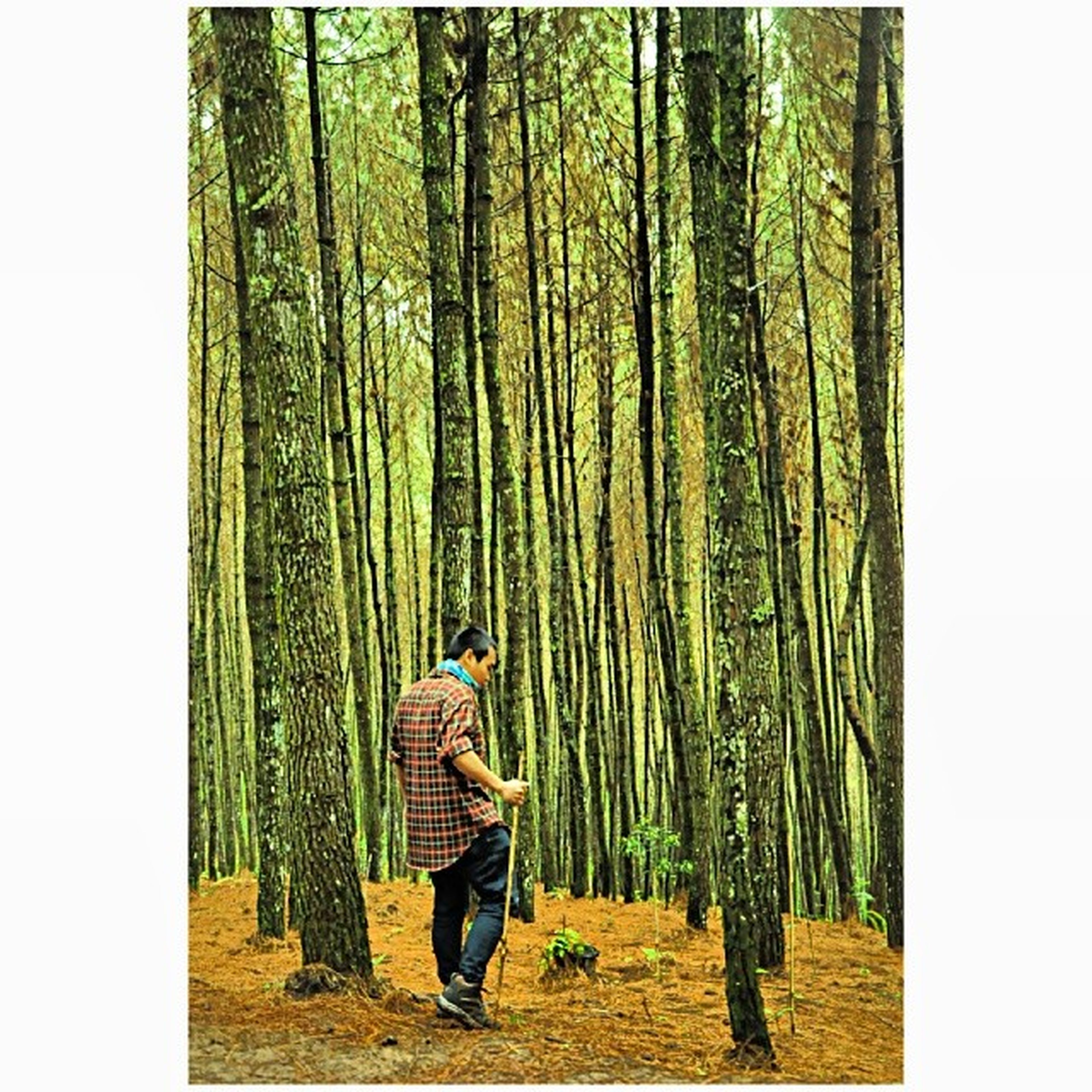lifestyles, leisure activity, transfer print, rear view, casual clothing, auto post production filter, standing, person, full length, tree, men, green color, walking, growth, day, outdoors, dress, hanging