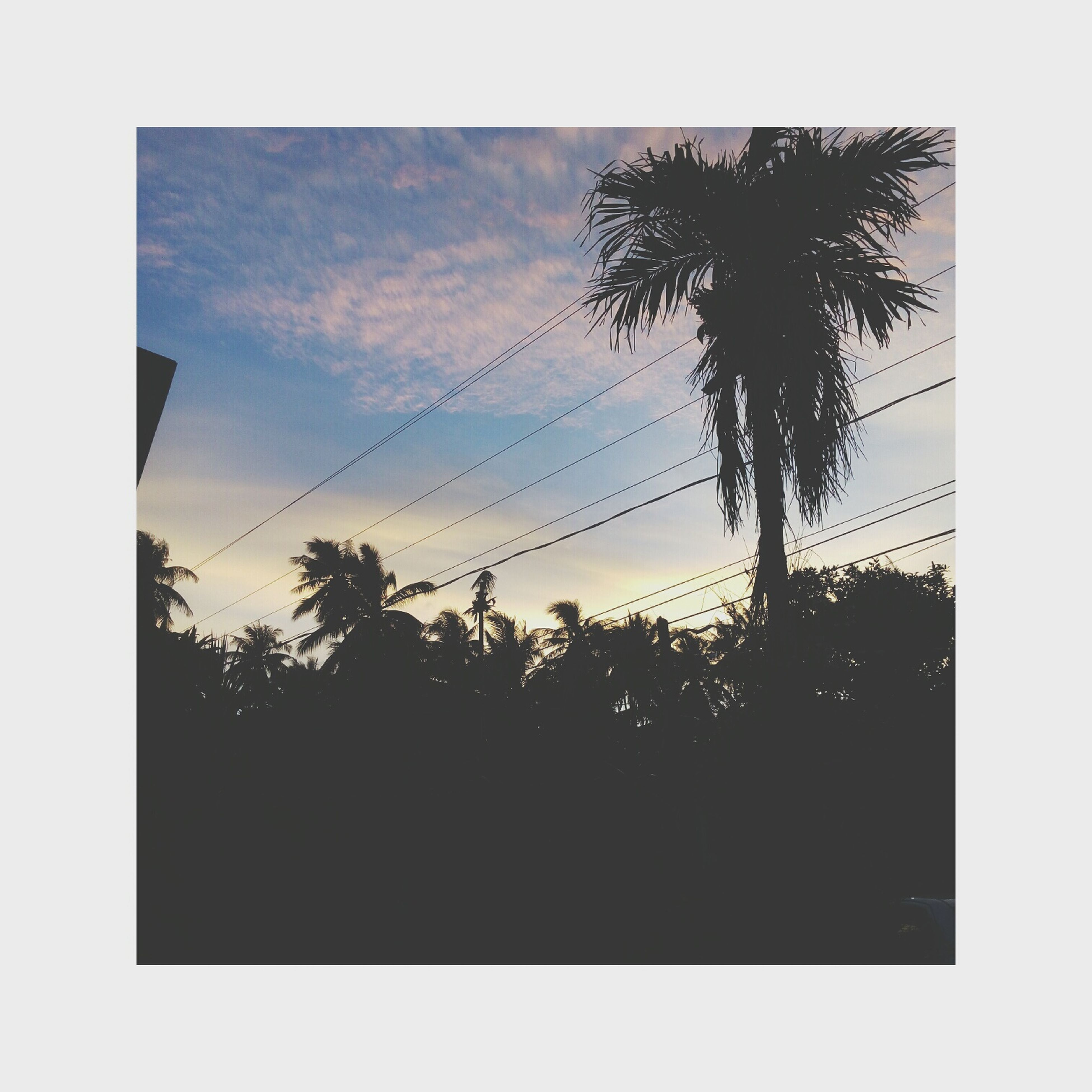 palm tree, tree, silhouette, sunset, sky, growth, nature, beauty in nature, no people, scenics, tree trunk, outdoors, day