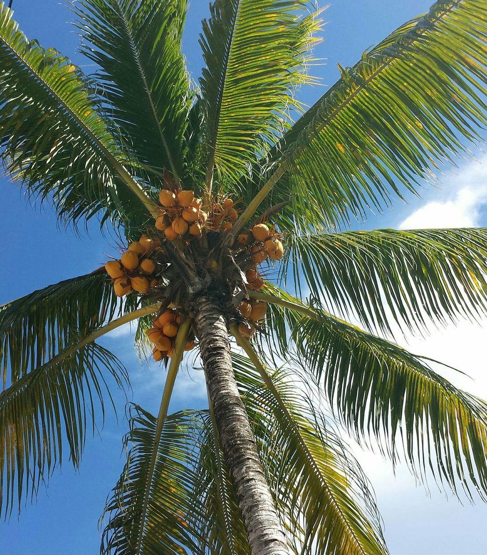 Beautiful stock photos of jamaica, Cloud, Day, Growth, High Section