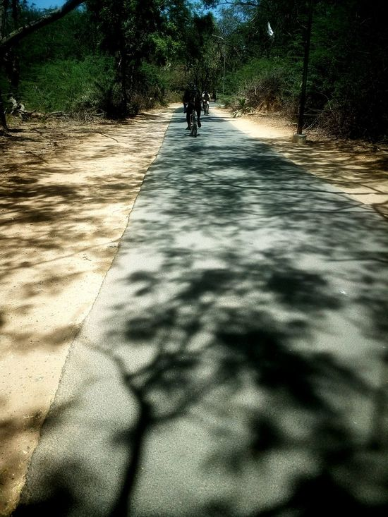 Nature Tree Day Outdoors Shadow Real People Water Sky People EyeEm On The Road Tranquility Randomshot Jungle EyeEm Nature Lover EyeEm Gallery Eyeemphotography Beauty In Nature On My Way Meanwhile Chennai IIT Madras Bright Daylight