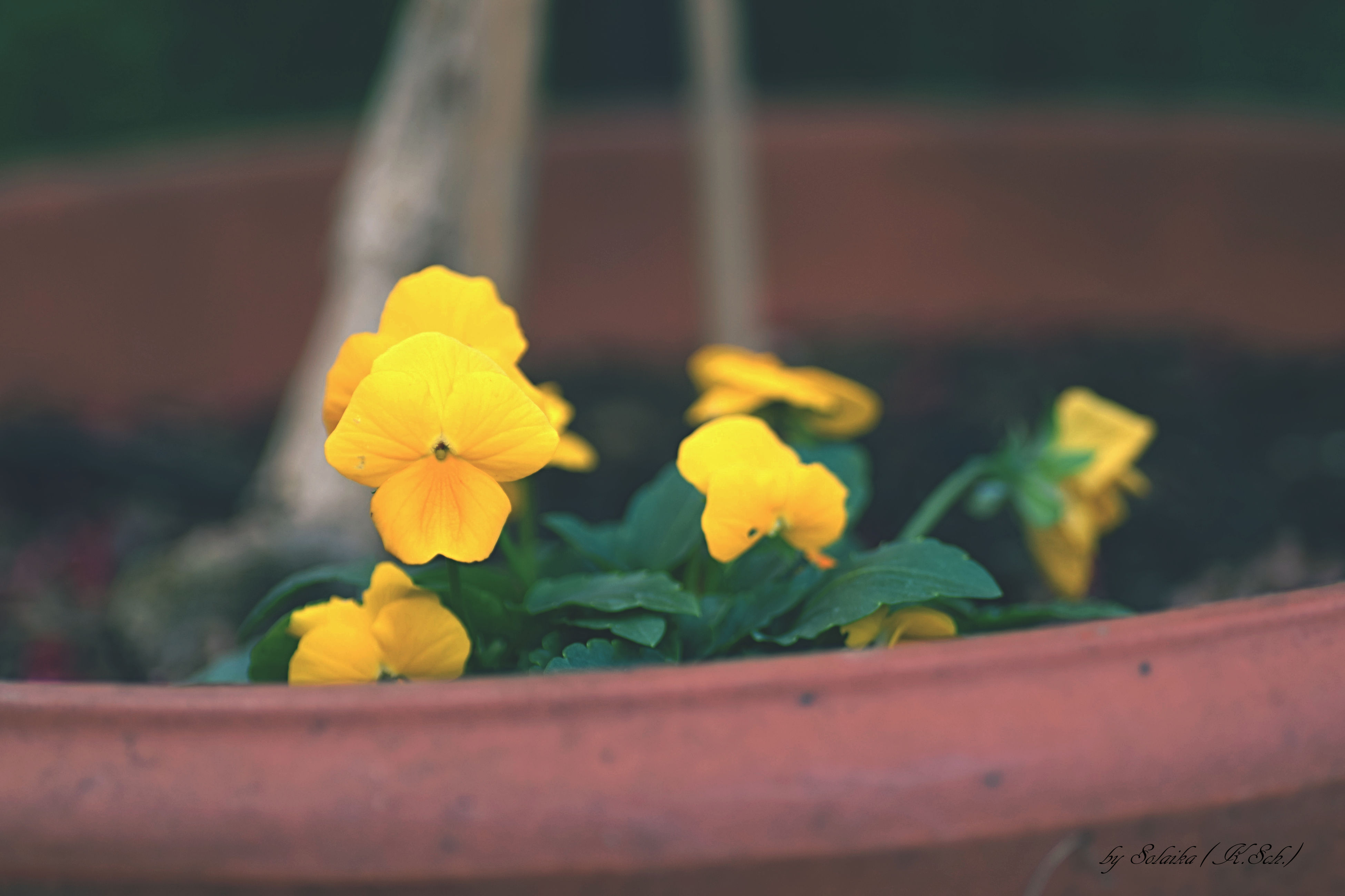 flower, yellow, petal, fragility, freshness, focus on foreground, flower head, beauty in nature, close-up, growth, blooming, nature, plant, selective focus, day, in bloom, outdoors, botany, stem, park - man made space