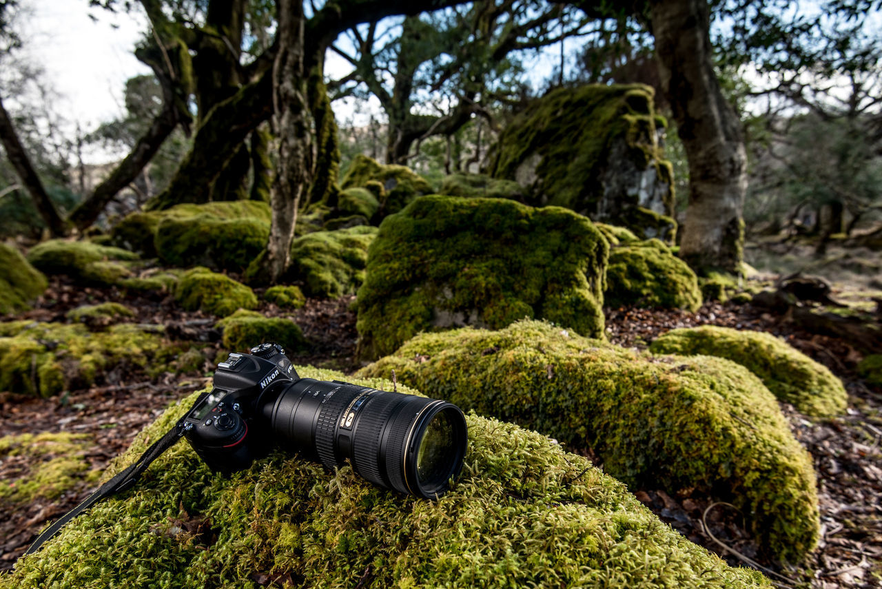 70-200mm Camera - Photographic Equipment Close-up D750 Day Dry Dock Forest Green Color Ireland Ireland🍀 Irish Moss Kilarney Moss Nature No People Outdoors Travelireland Travelphotography Tree Tree Trunks