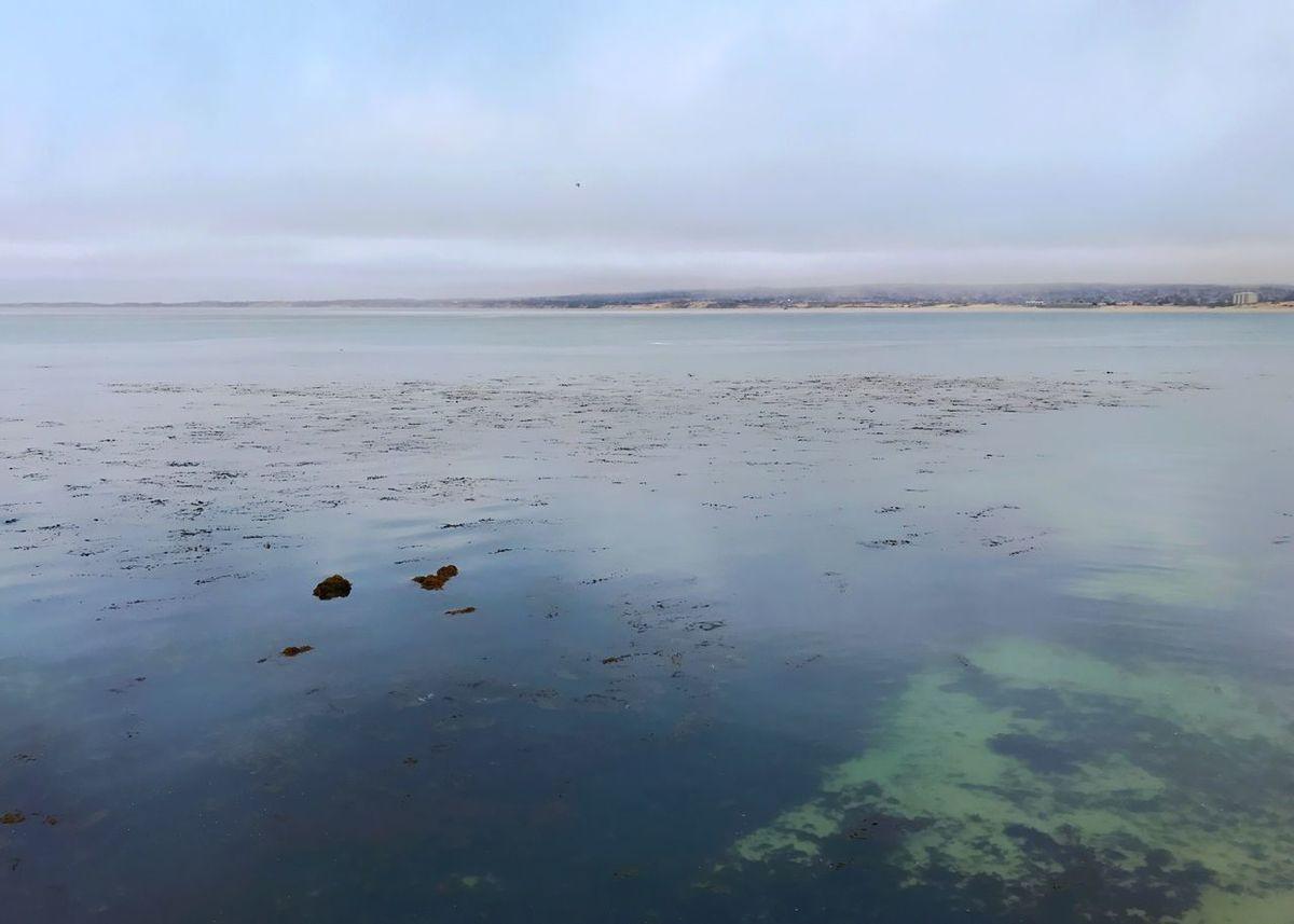 Blue water, green sea floor. Sea Monterey Bay Sky Water Cloud - Sky Scenics Horizon Over Water Day