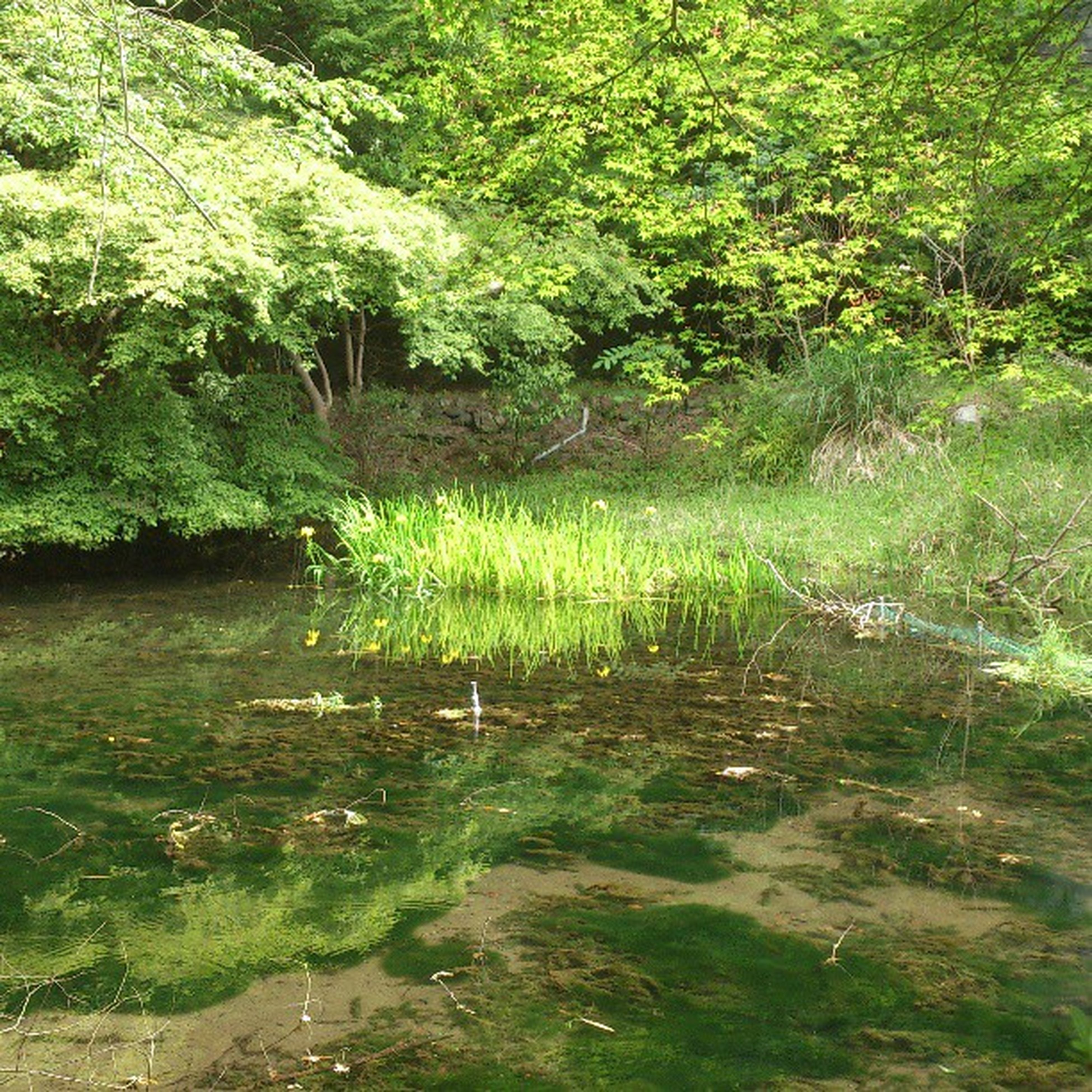 tree, water, tranquility, green color, tranquil scene, nature, growth, beauty in nature, scenics, river, plant, lake, reflection, pond, grass, forest, lush foliage, stream, idyllic, branch