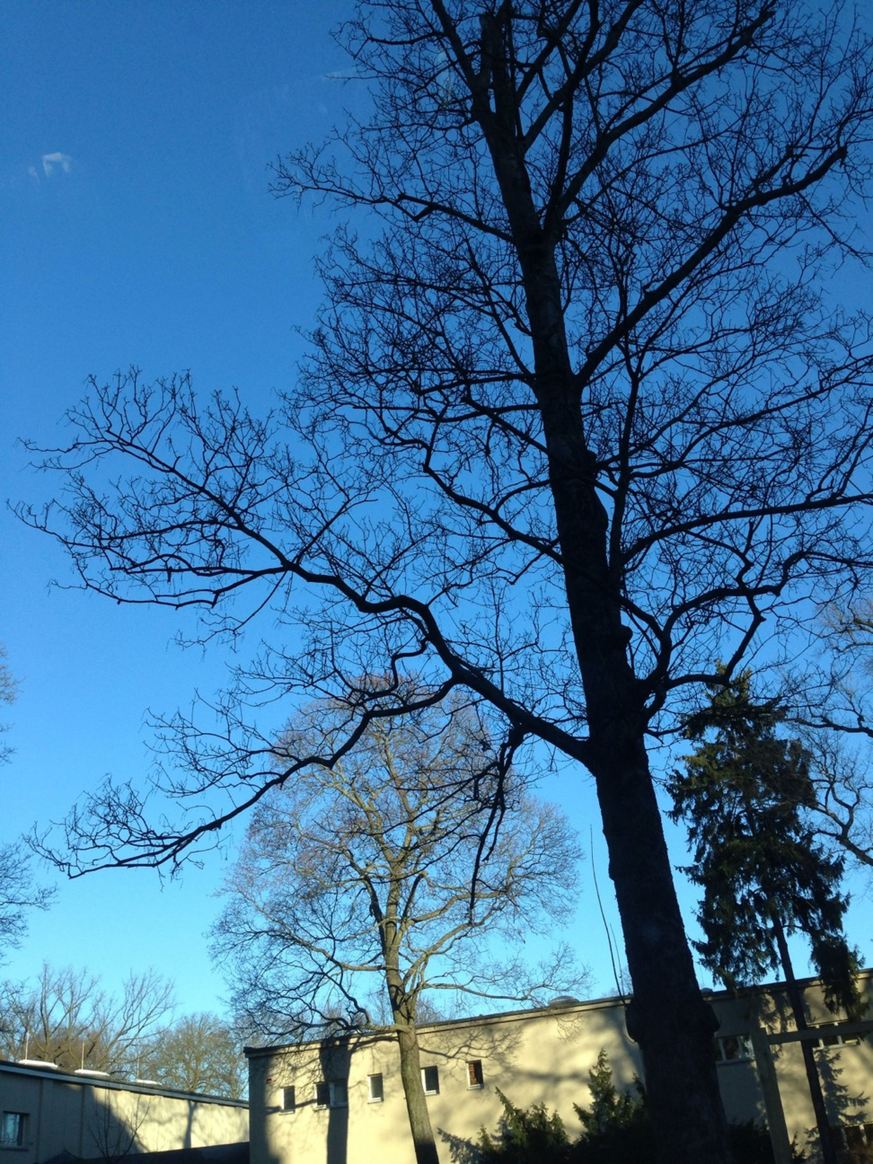 bare tree, tree, low angle view, branch, blue, built structure, building exterior, architecture, sky, clear sky, tree trunk, nature, day, outdoors, no people, house, tranquility, sunlight, high section, silhouette