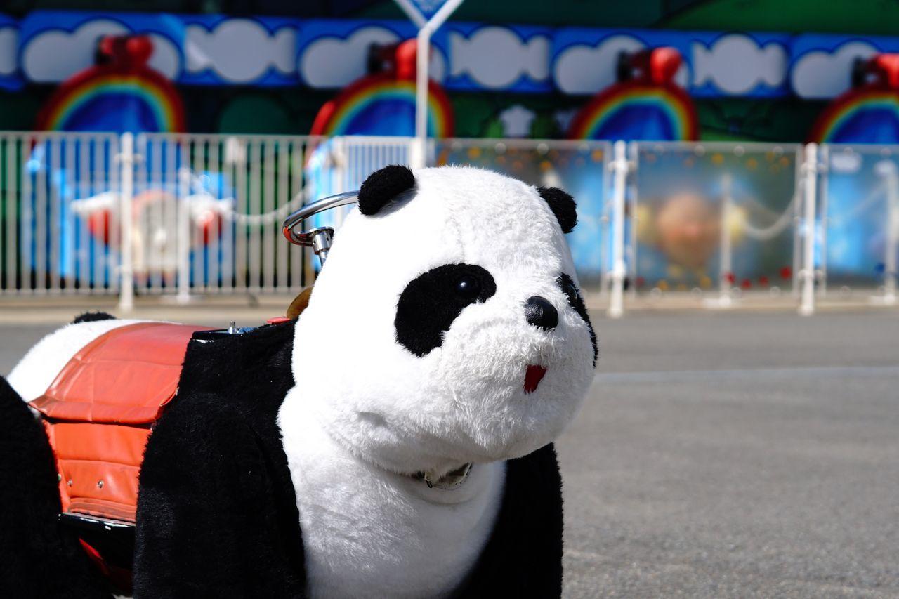 Panda Panda - Animal Stuffed Toy One Animal No People 遊園地 EyeEm Best Shots Enjoying Life Amusement Park Ride Relaxing α6300