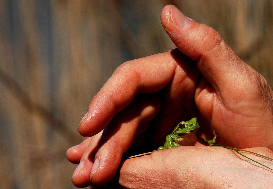 Arles Camargue Close-up Day Frankfurt Frog Green Human Body Part Human Hand Outdoors Tree Frog