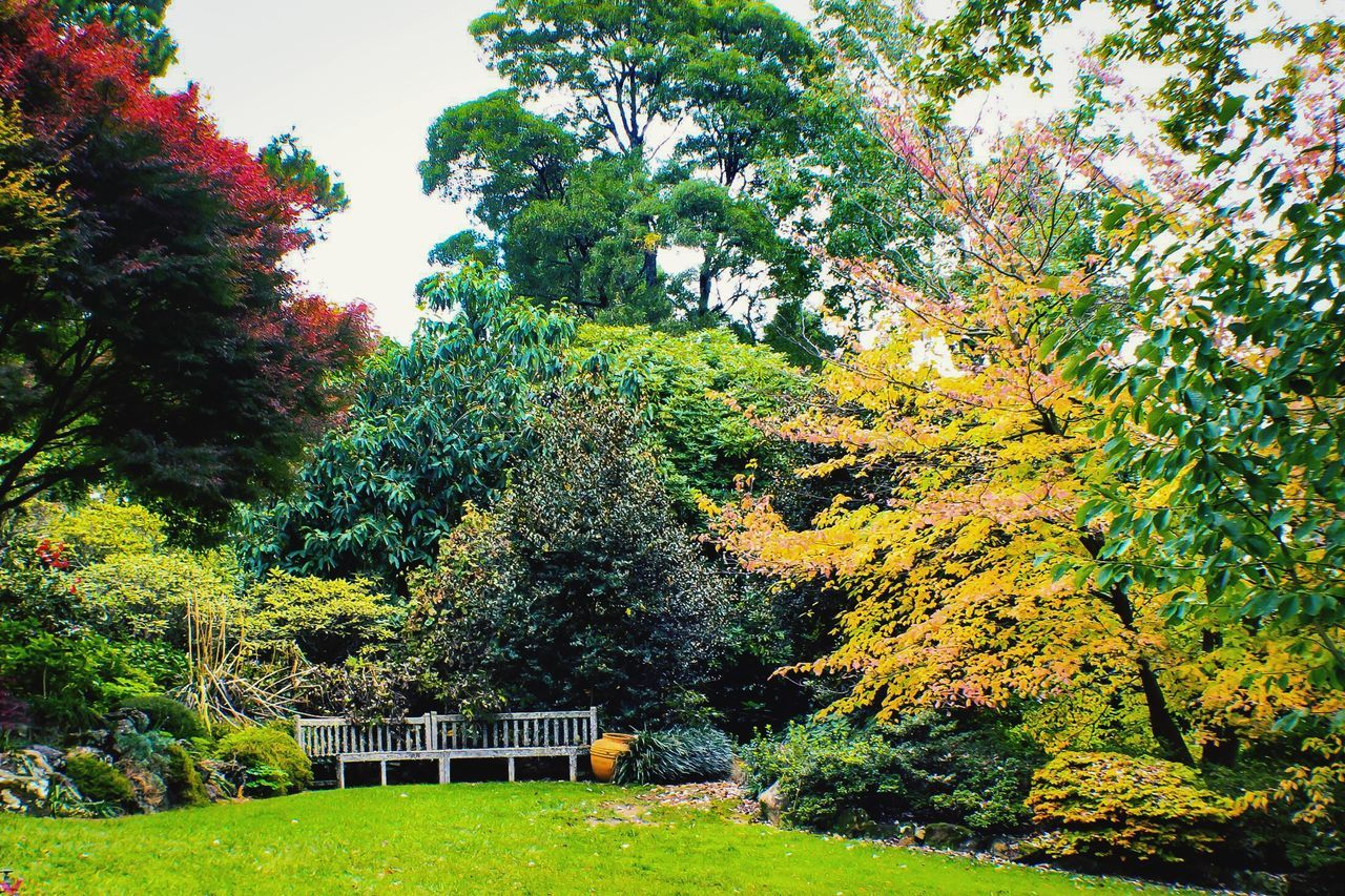 Garden Photography Garden Retreat Tree Nature Growth Beauty In Nature Tranquility Autumn Grass No People Day Green Color Tranquil Scene Outdoors Scenics Leaf Sky Solitude Landscape_Collection