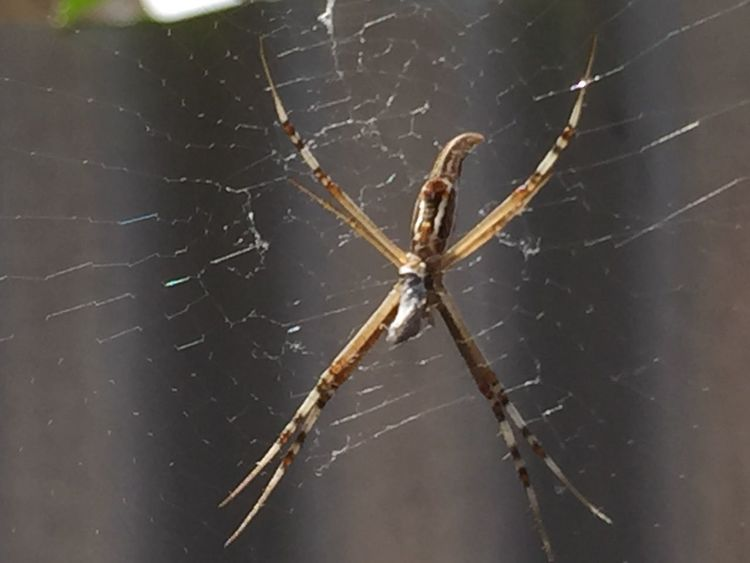 Spider Web Spider Web Eight Legs Sticky Fine Nature_collection Creepy