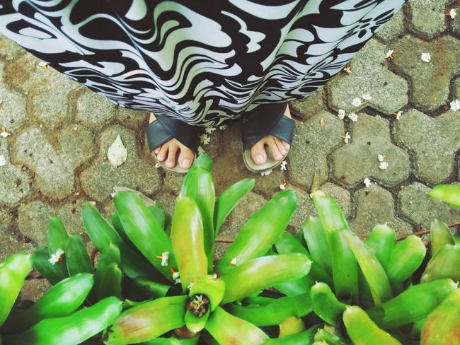 My Best Photo 2015 Deceptively Simple Eye4photography  Getting Inspired Urban Lifestyle My Feets Urban Gardening Good Morning World! ....my feets series... From My Point Of View