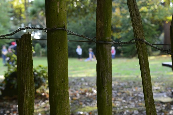 Fence Green Color Nature Close-up Beauty In Nature Nikon D5200 Greatbritain United Kingdom Christchurch Highcliffe Castle Highcliffe Castle
