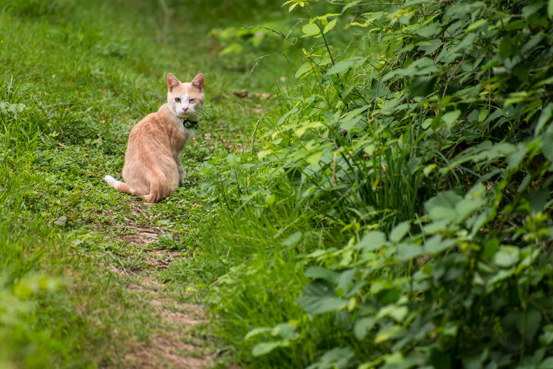 Mammal Grass One Animal Green Color Animal Themes Scared Scar One-eyed One-eyed Cat Animal Wildlife Nature Animals In The Wild Outdoors Pets Day Cat Kitten Domestic Animals No People Portrait