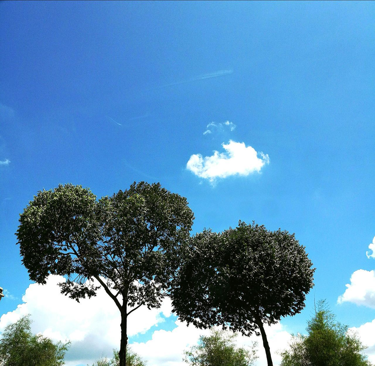 Tree Sky Blue Nature No People Beauty In Nature Cloud - Sky Outdoors Day Trees And Sky Trees Trees And Nature Leaning Leaning Tree Heart Shaped  Heart Shaped Tree Green Leaning On Leaning On A Tree Nature Photography Nature_collection The Purist (no Edit, No Filter) No Filter, No Edit, Just Photography