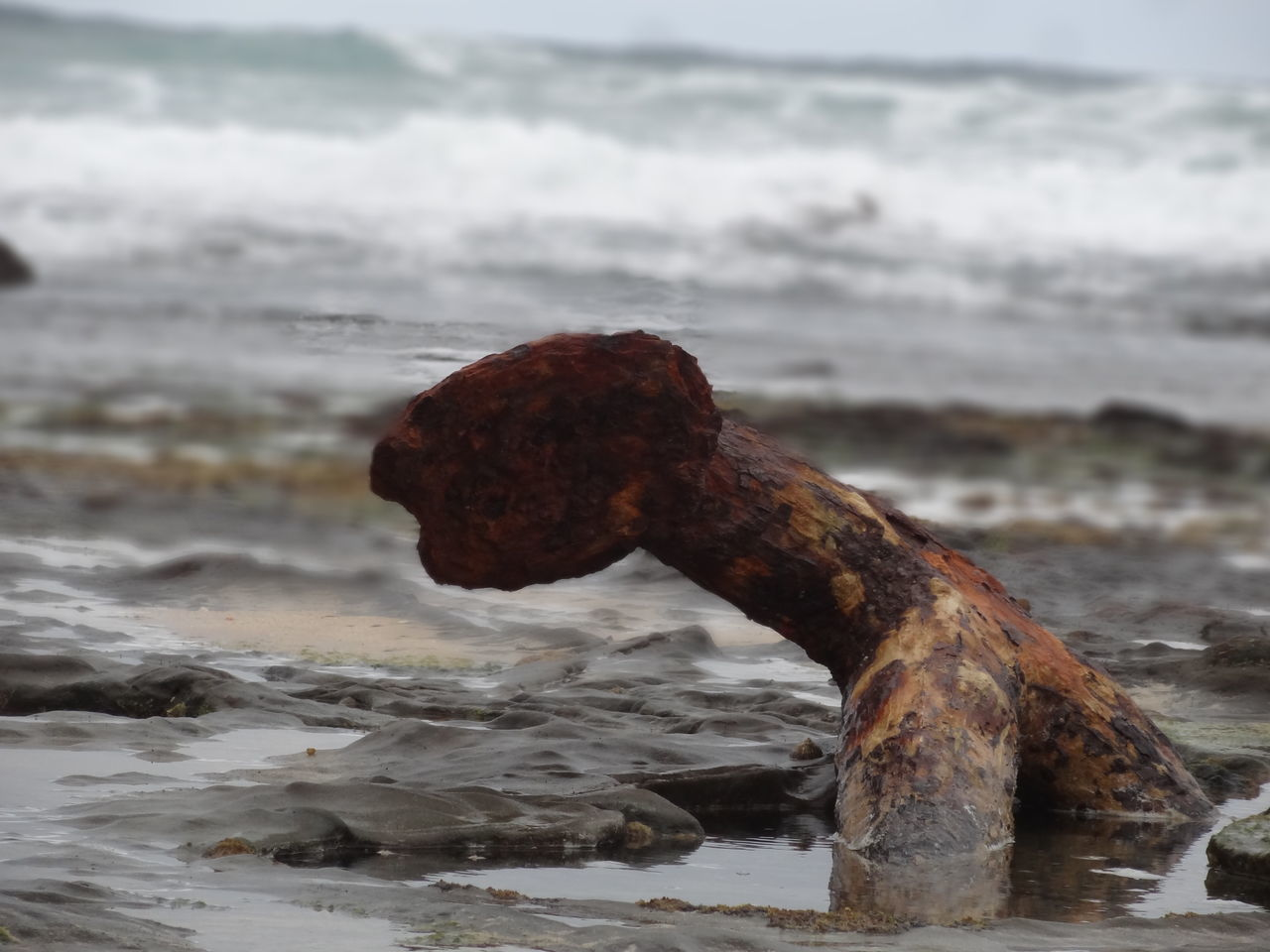 Anchor of a shipwreck, Victoria, Australia. Anchor Australia Australian Landscape Beach Close-up Day EyeEm Best Shots EyeEmNewHere History Horizon Over Water Los Nature No People Old Outdoors Rough Rusty S Sand Sea Shipwreck Shipwreck Beach Tragedy Water Wave