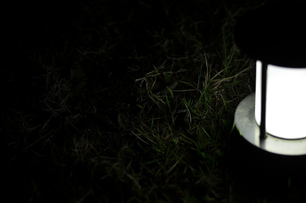 grass, close-up, no people, illuminated, paper, communication, growth, night, technology, information medium, black background, nature, indoors