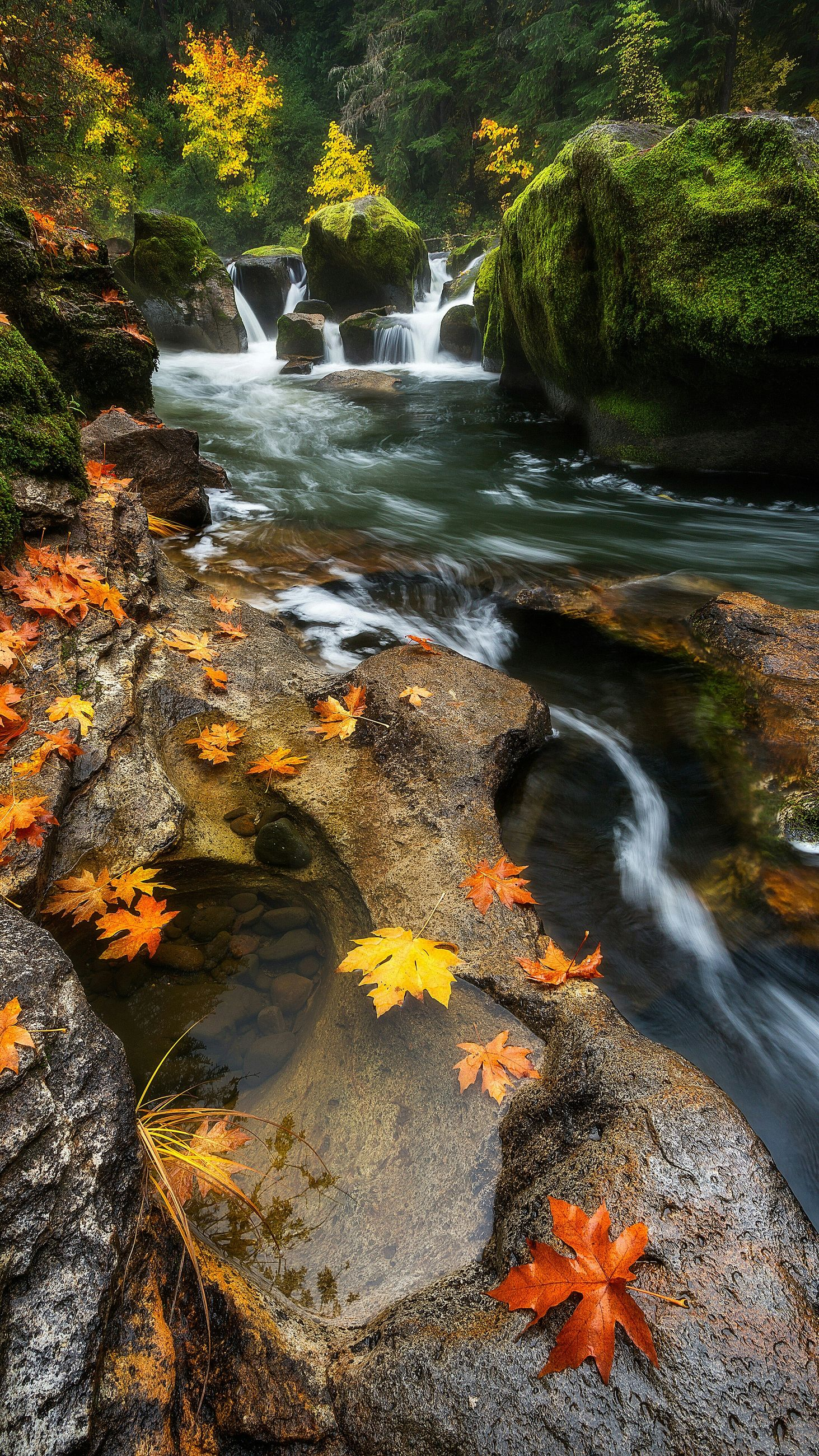 water, nature, beauty in nature, tranquility, tree, scenics, high angle view, growth, autumn, leaf, tranquil scene, plant, sunlight, flowing water, change, rock - object, stream, yellow, outdoors, day
