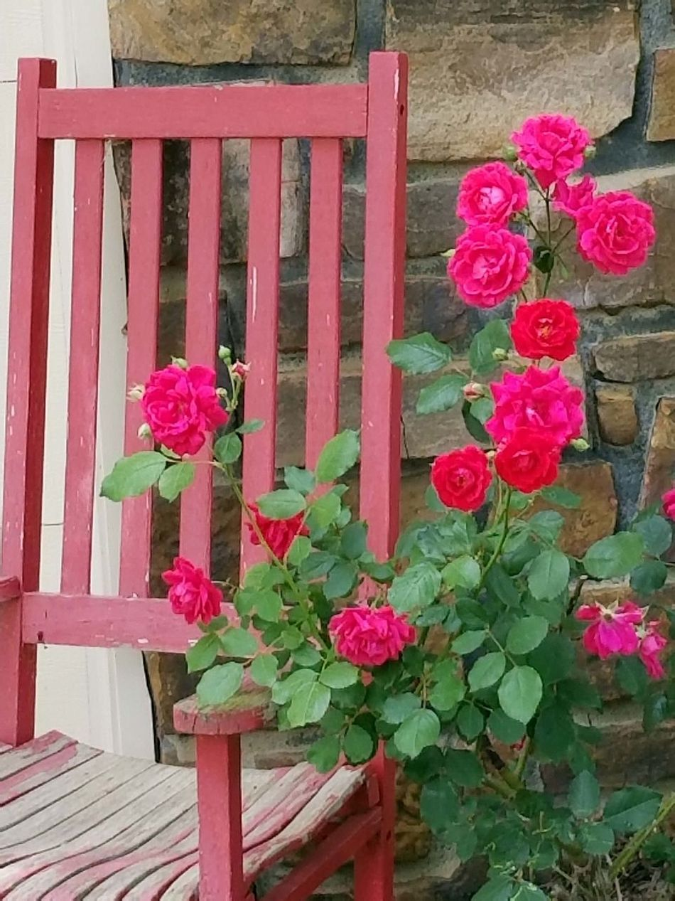 Plant Growth Flower Wood - Material Day No People Outdoors Pink Color Red Nature Close-up Architecture Window Box Freshness