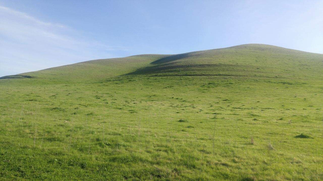 Green Color Nature No People Scenics Growth Landscape Outdoors Beauty In Nature Sky Lush - Description Day Grassland Grass Ranch Life Sunny Rural Scene Rural America Tourism Sunlight Low Angle View California