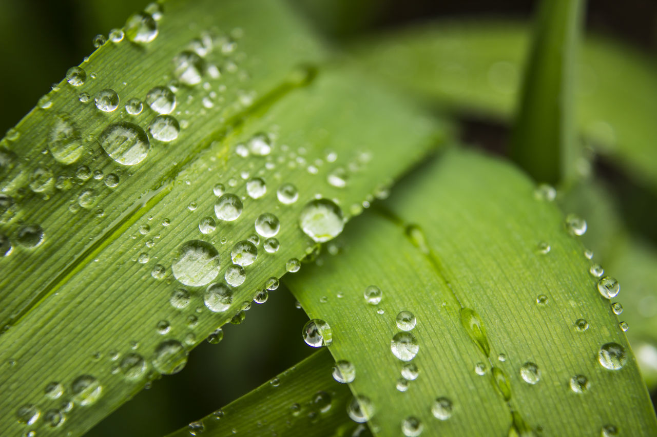 Beauty In Nature Close Up Nature Close-up Closeup Photography Day Drop Droplet Fragility Freshness Green Color Leaf Macro Photography Nature No People Outdoors Plant Purity Rain Rain Drops On Leaves RainDrop Water Wet