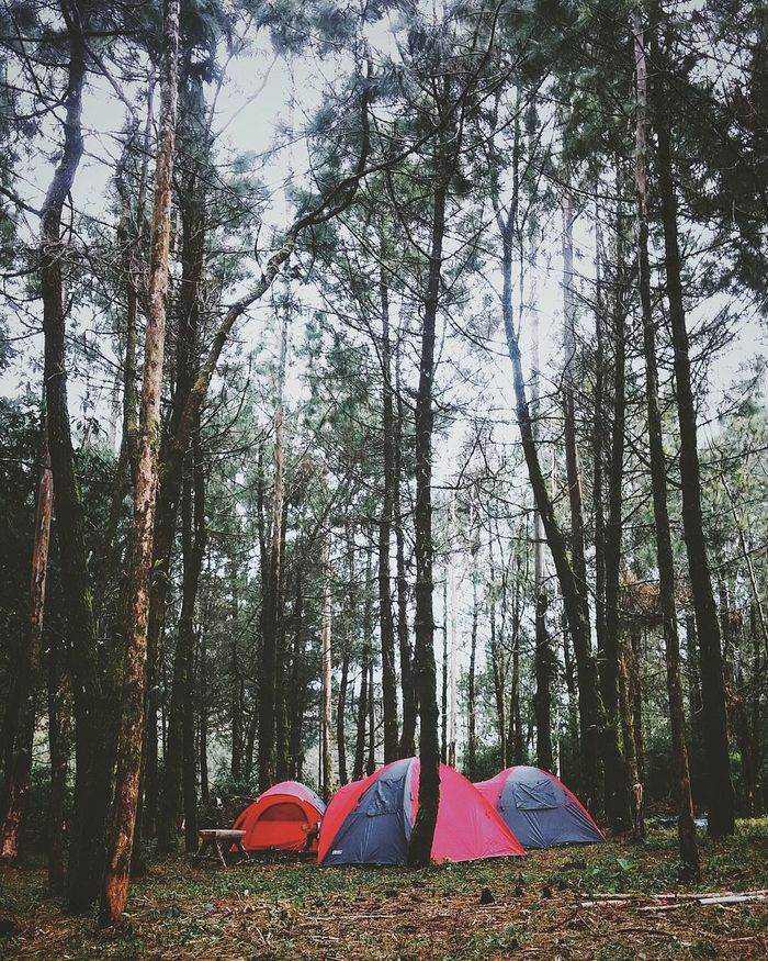 Tree Nature Outdoors Beauty In Nature Landscape_Collection Camping The Secret Spaces TCPM The Great Outdoors - 2017 EyeEm Awards BYOPaper! Place Of Heart Been There. Done That. Connected By Travel