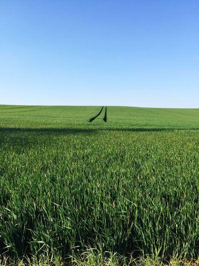 Landscape Clear Sky Grass Field Green Blue EyeEmNewHere An Eye For Travel