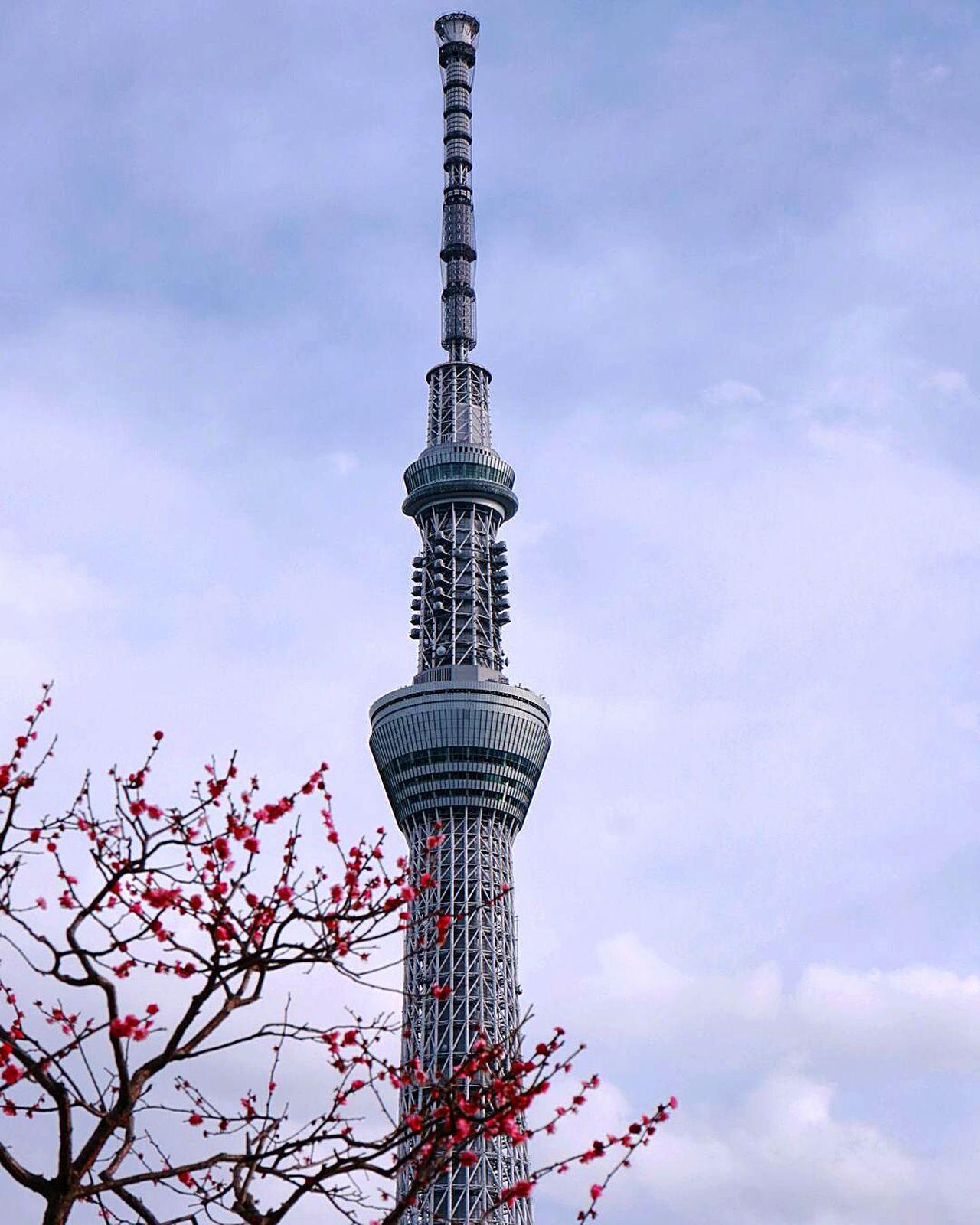 Tower Sky Japan Tokyo Ume Blossom Flower Flowers Blossoms  Tokyoskytree Skytree Sumidapark Tokyo,Japan