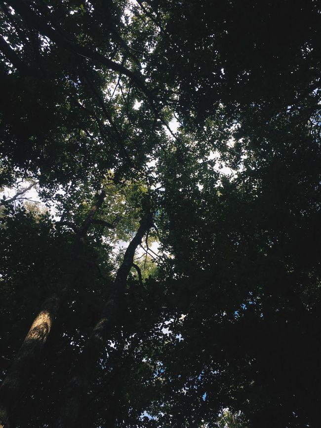 First Eyeem Photo Tree Lookingup Sunlight Shadow Shadows & Lights Green