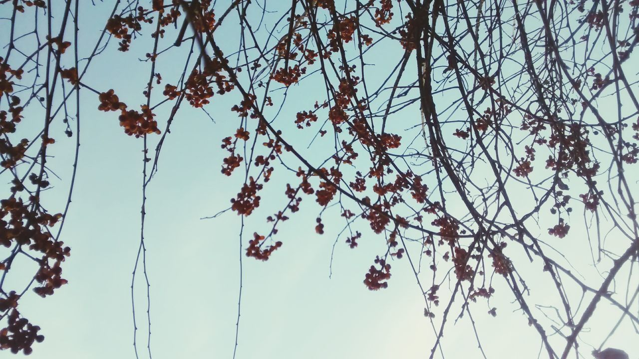 nature, beauty in nature, growth, low angle view, flower, branch, tree, fragility, no people, day, outdoors, plant, clear sky, catkin, sky, freshness, close-up