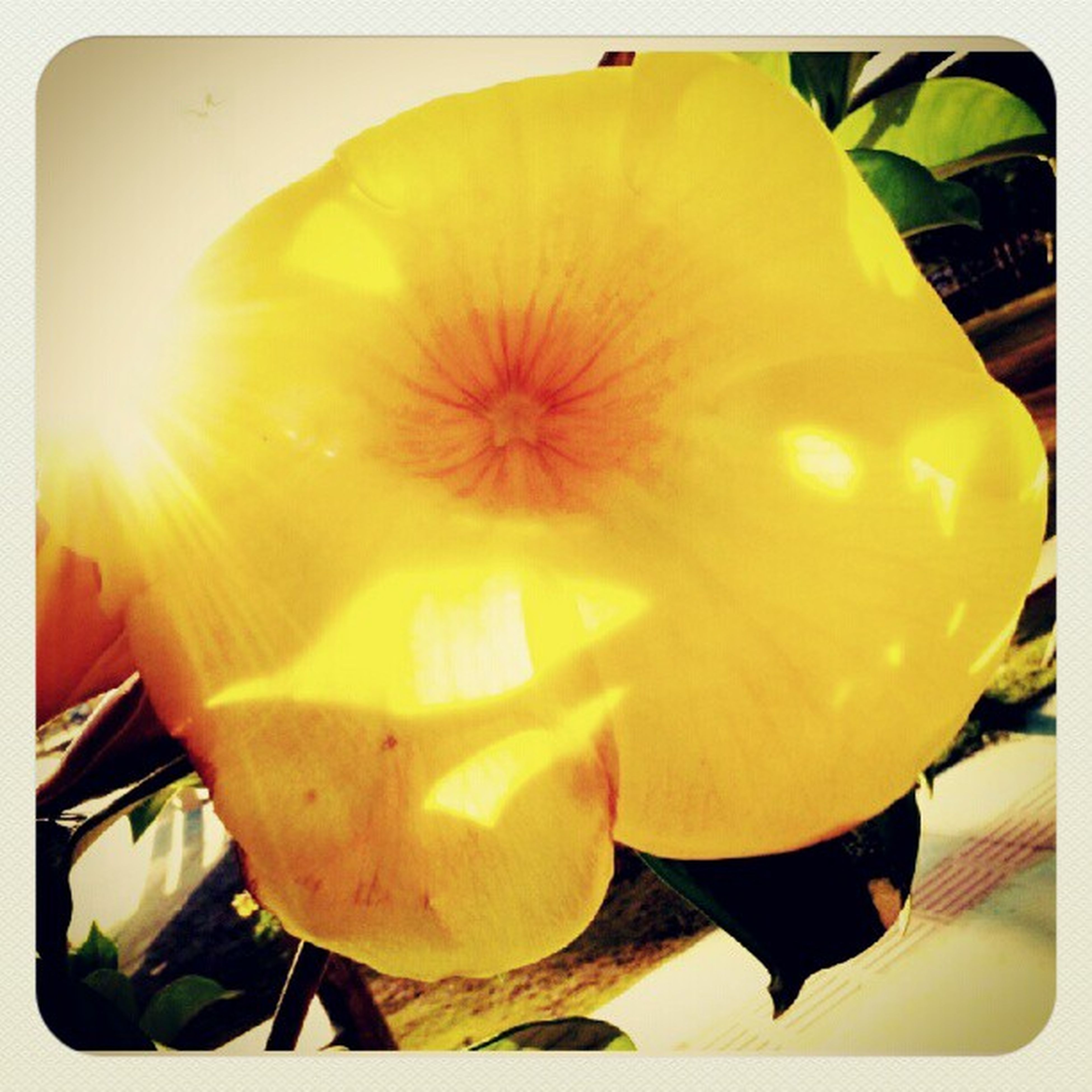 transfer print, yellow, auto post production filter, freshness, indoors, close-up, flower, food and drink, sunlight, table, high angle view, fragility, petal, day, no people, fruit, food, orange color, still life, nature