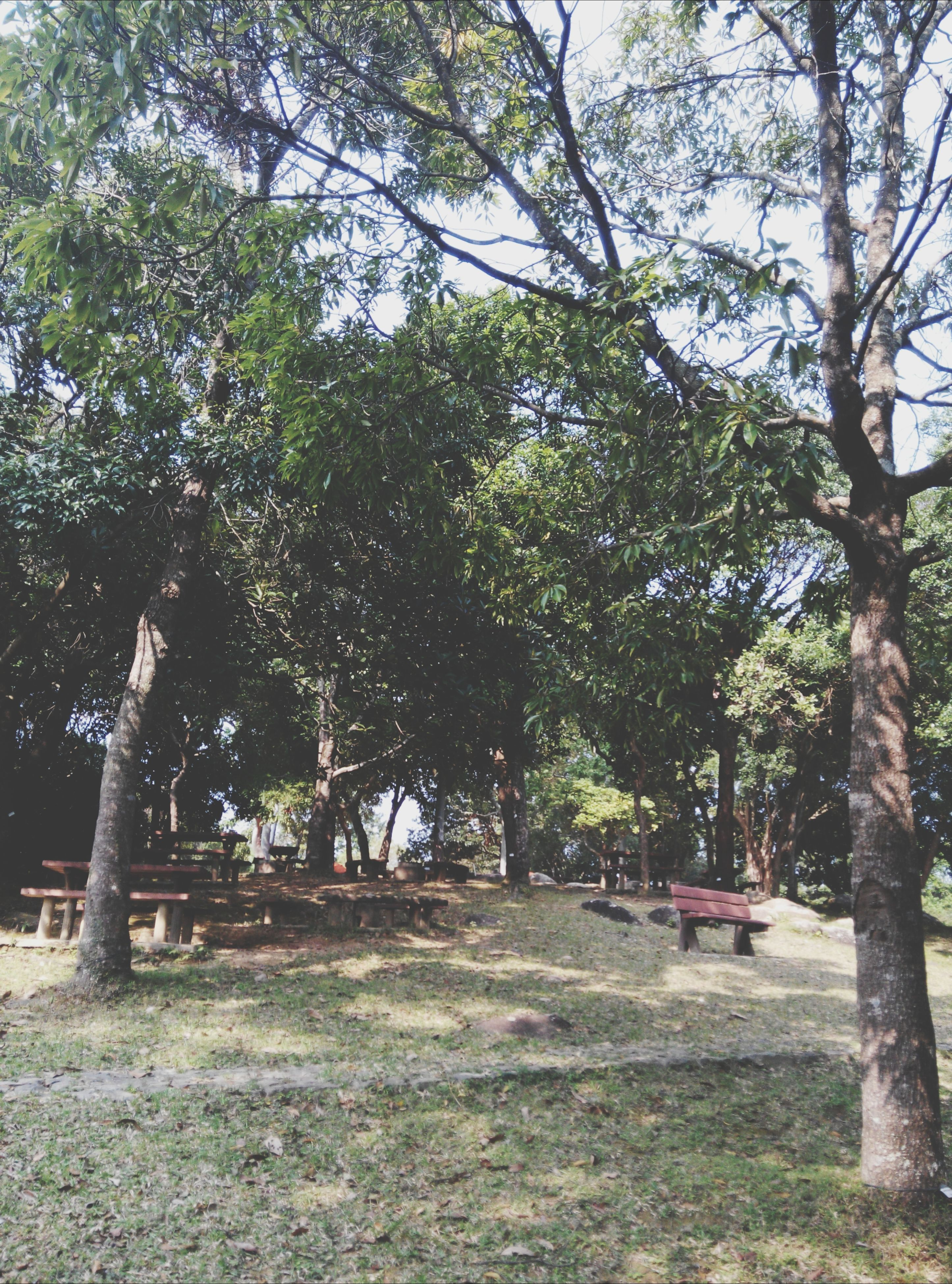 tree, growth, tranquility, tree trunk, branch, nature, tranquil scene, beauty in nature, park - man made space, green color, scenics, landscape, day, sunlight, sky, grass, outdoors, footpath, park, the way forward