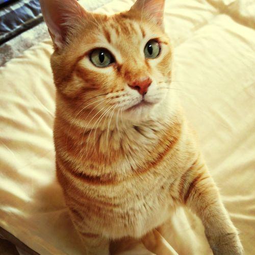 Boku Staring.. Cat .....