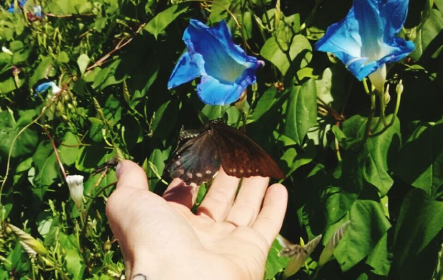 Human Hand Leaf Green Color Outdoors Plant Animal Themes Nature Butterflyporn Blue Blossom A Hand In Nature Beauty In Nature Outdoors Photograpghy  Scenics Timing Is Everything