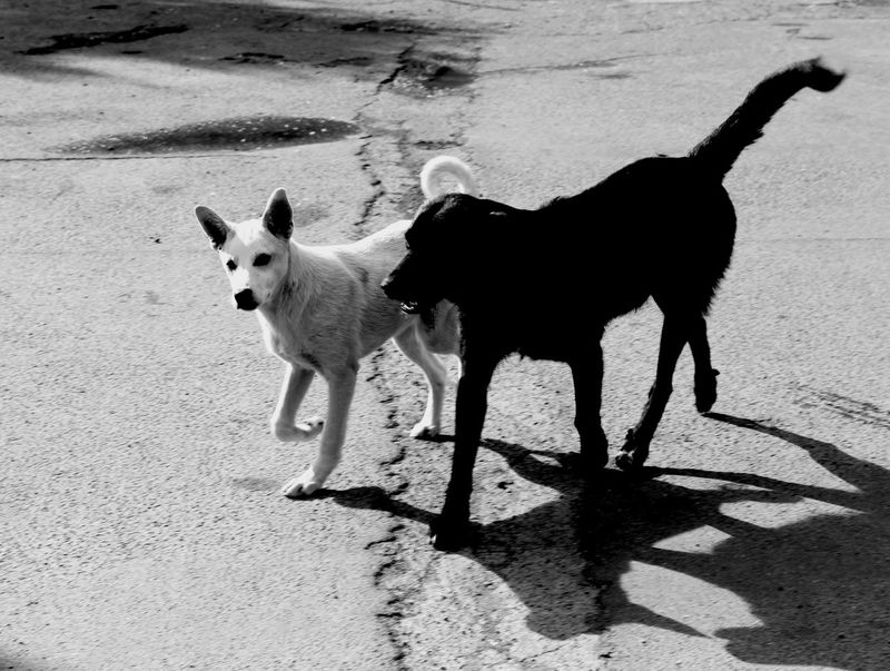Opposites attract... TakeoverContrast Monochrome Photography Getting Inspired Eyeem Market Blackandwhite Dogs Of EyeEm Animal Themes Exceptional Photographs EyeEm Gallery Capture The Moment Opposites Urbanphotography Walking Together From My Point Of View Different Perspective