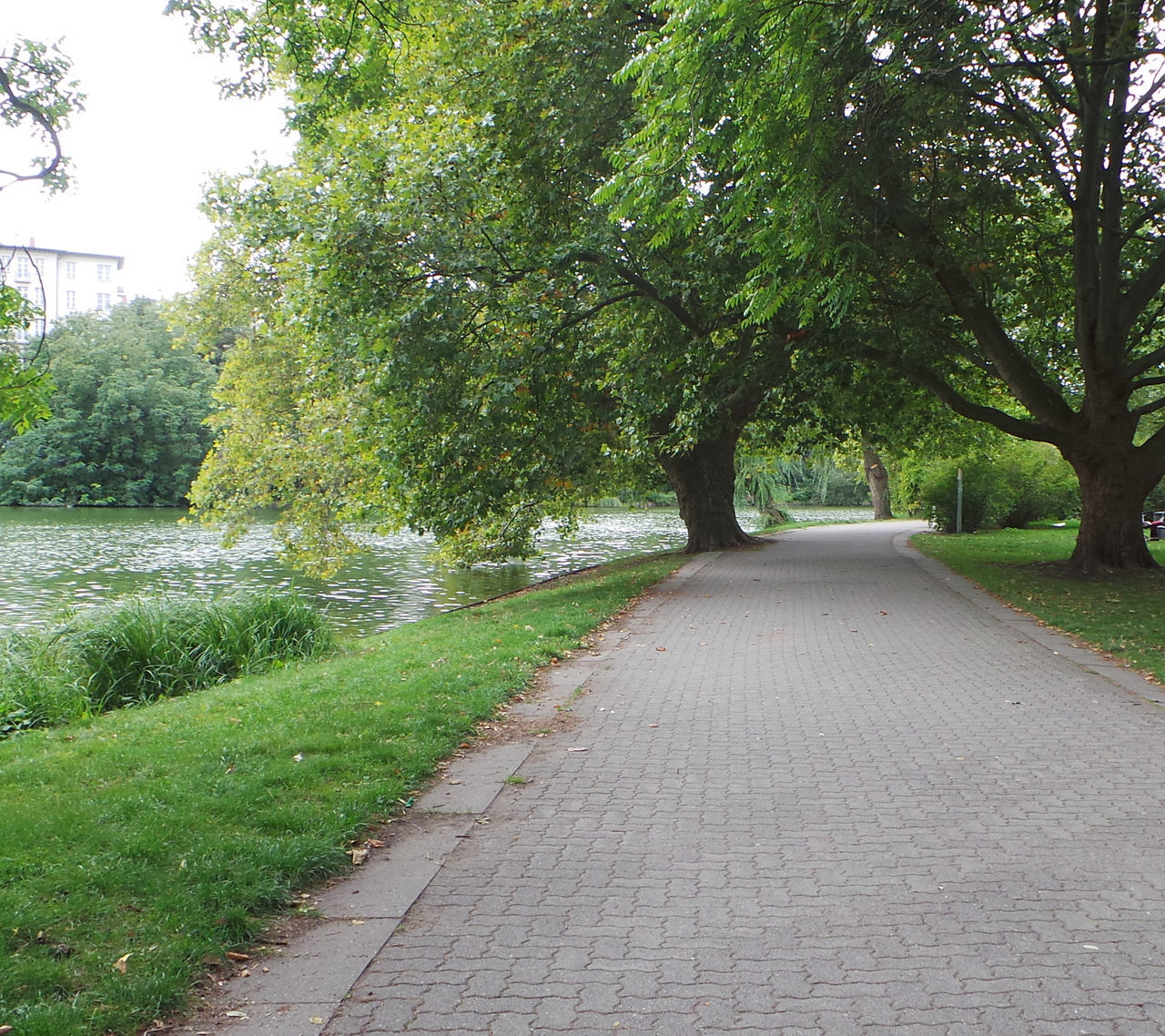tree, the way forward, nature, grass, growth, river, road, outdoors, no people, beauty in nature, day, scenery, sky