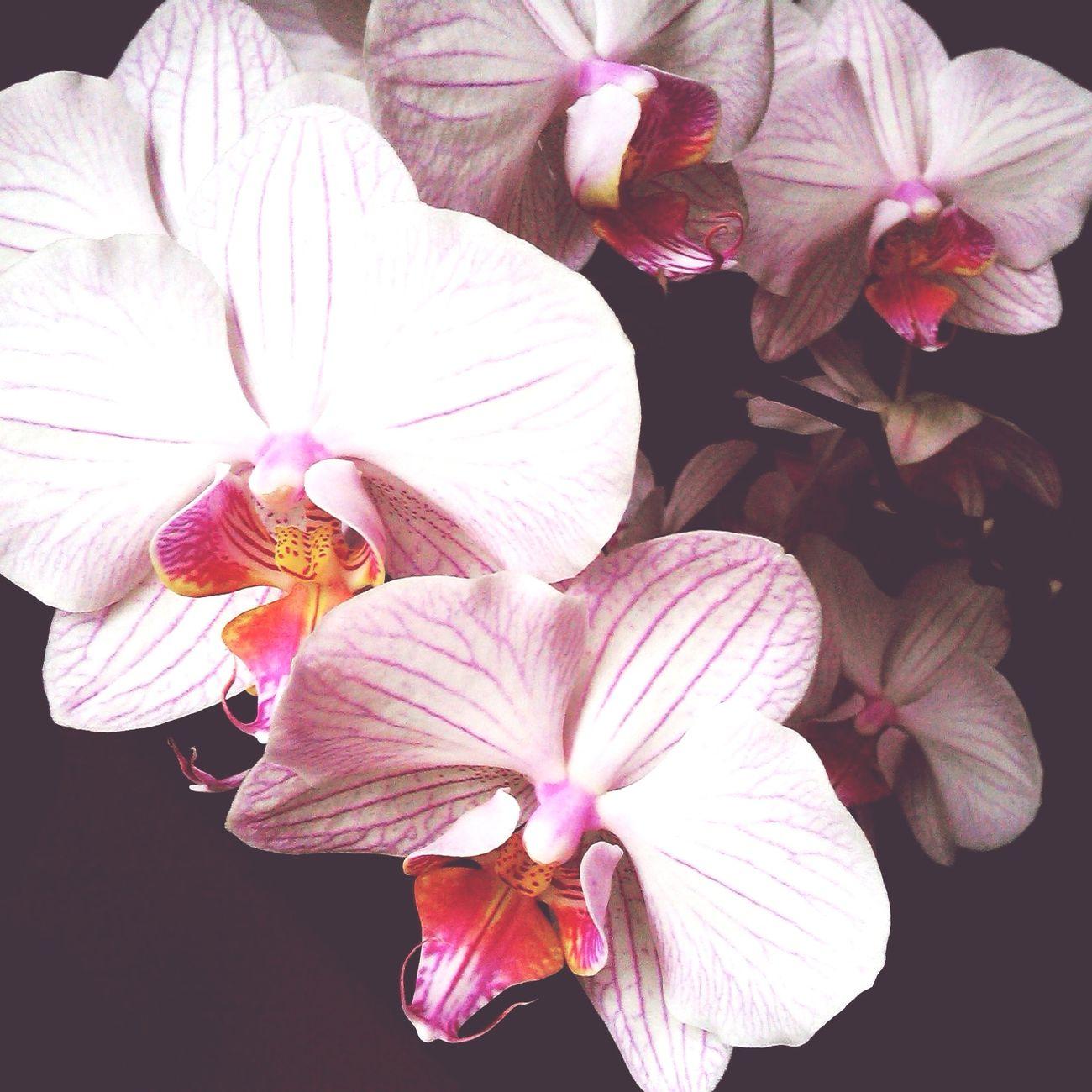 Flowers Orchid Beauty