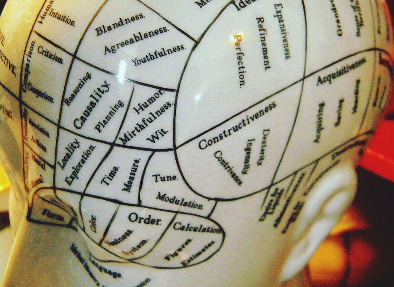 the brain in a nutshell