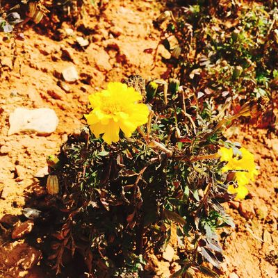 Nature Flower Beauty In Nature Plant Outdoors No People