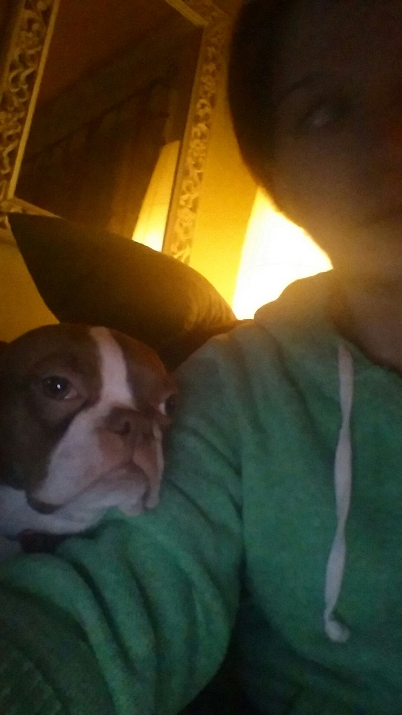Friendship Bostonterrier Daisy Bostonsofeyeem Dogs Of EyeEm Piglet BestInShow Wehangoutandtakeselfies Dogselfies