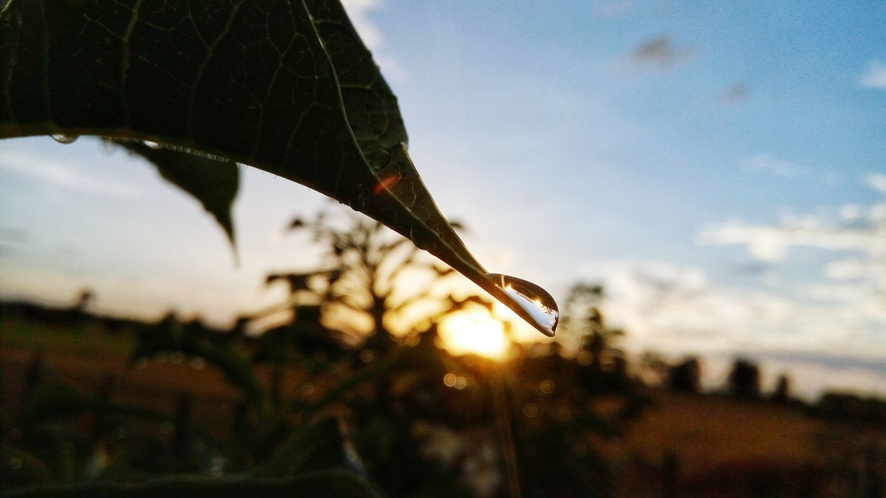 leaf, nature, focus on foreground, close-up, plant, outdoors, growth, no people, drop, day, beauty in nature, sky, fragility, sunset, water, tree, freshness