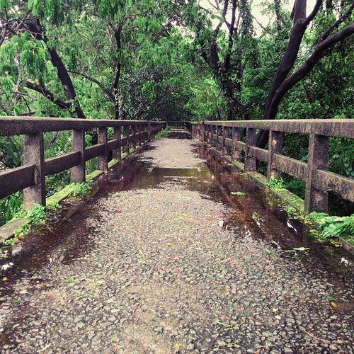 This bridge ♡ and rain ♡ Premam Aluva Rain