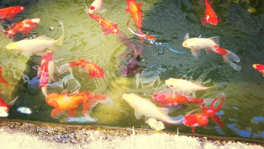 Getting Inspired Nature Fish Pond