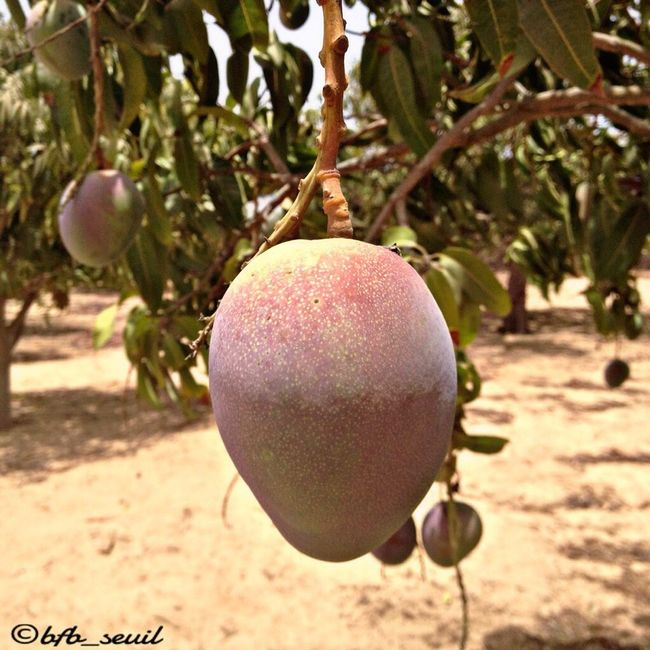 Whoso MAN GOES to THIES,without money,eats MANGOES😜😜😜 🗣A DAY IN THIES🍈🍈 Manguoes Vegetables People Of EyeEm