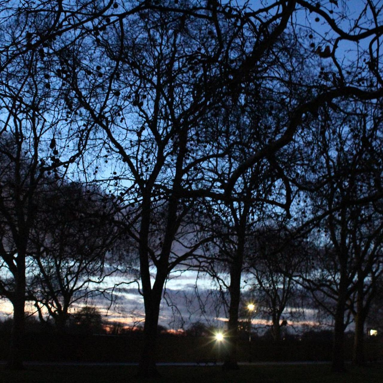 tree, bare tree, night, nature, outdoors, silhouette, no people, tranquility, beauty in nature, scenics, branch, sky