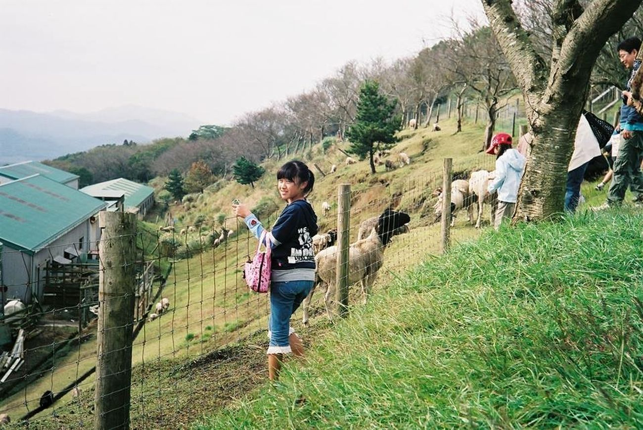 Contax G2 Filmcamera Biogon マザー牧場