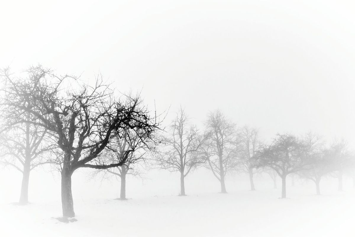 Sleeping trees Tree Nature Branch Plant Outdoors Day White Background EyeEm Best Shots - Nature Fine Art Photograhy Minimalism Fog Atmospheric Mood Nature White EyeEm Nature Lover Winter Beauty In Nature Bare Tree Mystical Scenics Abstract Winterlandscape Melancholic Landscape Blackandwhite Photography Bw_collection Foggy Day