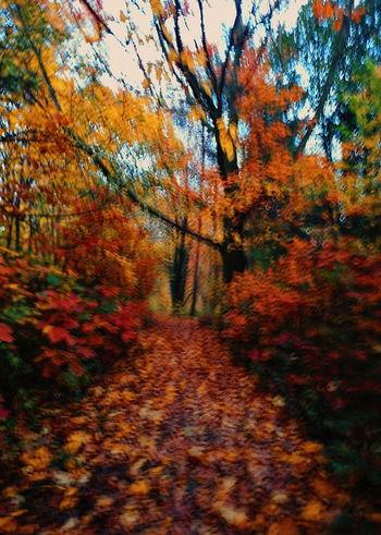 #autumn #Bokeh #colours #eyembestshot #eyemnaturelover #forest #landscape #nature #photography #xperia