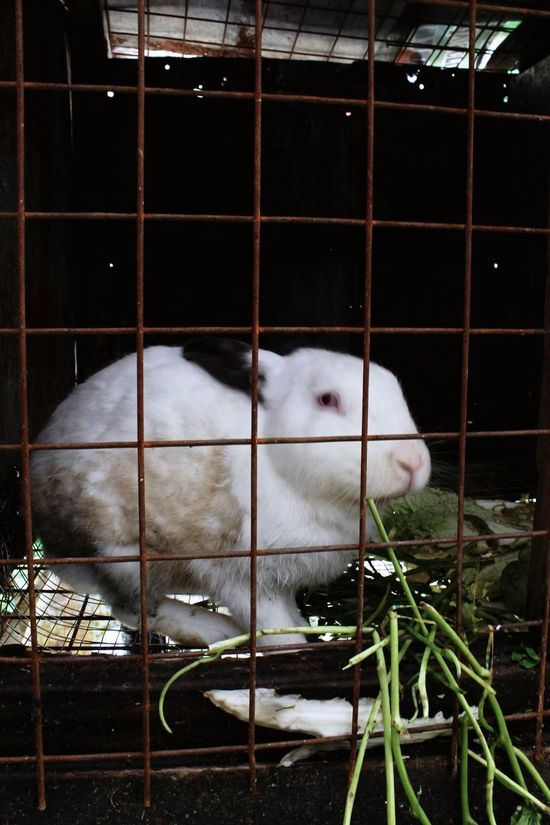 Wildlife Animals In Captivity Cage Wildlife Photos Rabbits 🐇